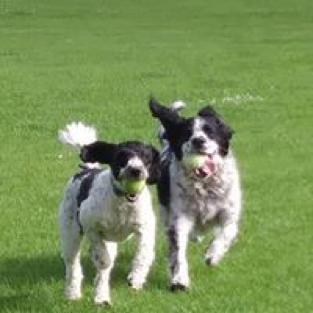 Happy dog - Pet care service