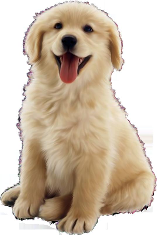 Dog home boarding image