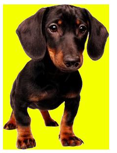 Dog Sitter Image